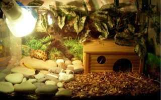 Ультрафиолетовая лампа для черепах: какие приборы подходят для сухопутных и водных рептилий, чем их заменить
