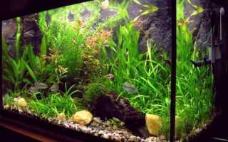 Внешний фильтр для аквариума: пошаговая инструкция изготовления устройства своими руками