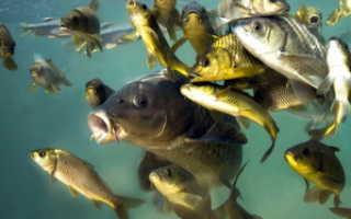 Хищные рыбы: виды плотоядных рыб из моря, рек и пресноводных водоемов; названия и описание хищников