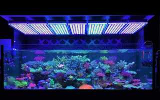 Подсветка для аквариума: преимущества светодиодных ламп, как своими руками выполнить led светильник