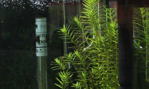 Насосы для аквариума: предназначение, виды, установка погружных и внешних приборов для воды