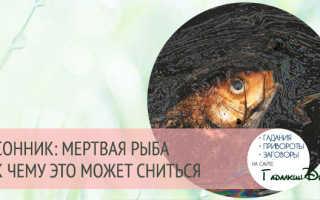 К чему снится рыба по соннику: живая или мертвая, значение сна для мужчин и женщин