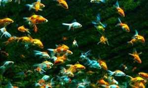 Аквариум для начинающих: содержание и уход в домашних условиях, аквариумистика для новичков