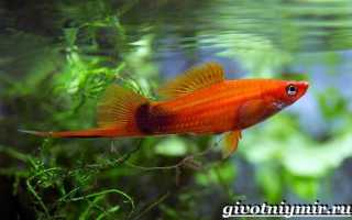 Рыба-меч: где водится и обитает, интересные факты о меченосе