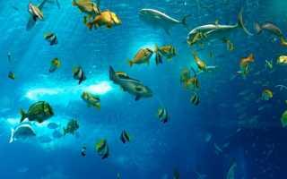 Самые маленькие рыбы в мире: морские и пресноводные рыбки, как называются и описание