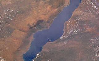 Малавийские цихлиды: как содержать африканских рыбок, мбуна и утака, требования к корму и аквариуму
