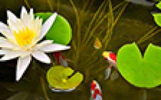 Удобрения Aquayer: нужна ли подкормка аквариумным растениям, разновидности УДО от Акваер