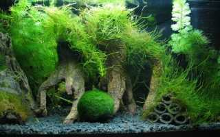 Виды аквариумных мхов: условия содержания, правила декорирования,