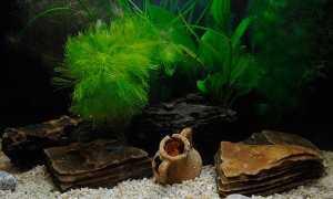 Дизайн аквариума: стили интерьера, красивое оформление своими руками с помощью макетов и растений