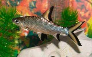 Аквариумные рыбки и их родина: названия рыб и страны их происхождения