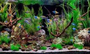 Задний фон аквариума: оформление поверхности стенки своими руками, разновидности аквариумных композиций