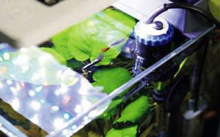 Обогреватель для аквариума с терморегулятором: выбор термонагревателя для подогрева воды