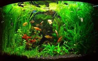 Удобрения для аквариумных растений: виды подкормок, приготовление своими руками