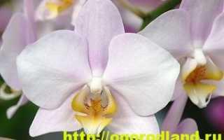Эпифит: особенности строения и классификация растения, примеры некоторых видов цветов
