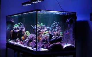 Свет в аквариуме: какое выбрать освещение для рыб и растений, разновидности аквариумных светильников