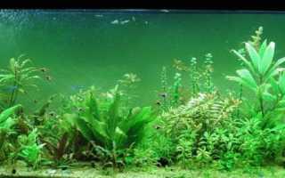 Что такое биологическое равновесие в аквариуме, или биобаланс?