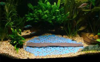 Риччия (riccia): описание и виды водного мха, как вырастить в аквариуме на поверхности и закрепить на дне