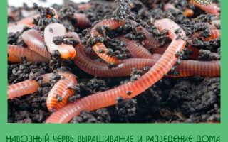 Навозный червь: популярная наживка у рыболовов, особенности разведения и продажи червей в домашних условиях