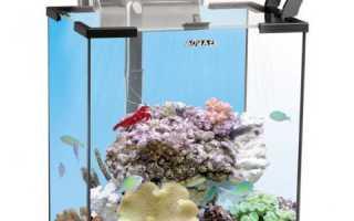 Морской аквариум: достоинства и недостатки, выбор устройств, покупка существ и создание водоёма для начинающих