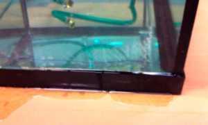Ремонт аквариума: типовые поломки, как их отремонтировать своими руками и в домашних условиях устранить течь