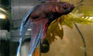 Антипар: описание и состав, когда лекарство применяют для лечения рыб, инструкция и противопоказания
