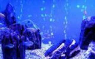 Биодизайн аквариума: основные стили и направления аквабиодизайна