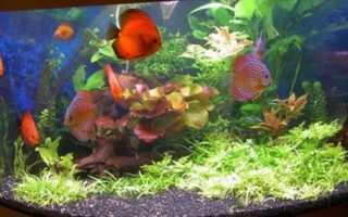 К чему снятся аквариумные рыбки: разные виды, толкования для женщины, значения в сонниках