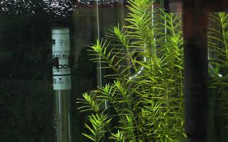 Как установить фильтр в аквариум: типы оборудования, как поставить и погружать внешнюю или внутреннюю помпу