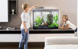 Как и зачем кормить рыбок овощами?