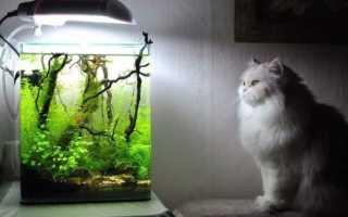 Оборудование для аквариума: какое нужно для больших и маленьких резервуаров, освещение и фильтр, растения и водонагреватель