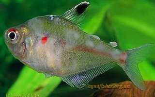 Лекарство для аквариумных рыб JBL Эктол флюид плюс ( JBL Ektol fluid Plus ) – инструкция по применению