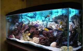 Как сделать аквариум своими руками в домашних условиях разных объемов: пошаговая инструкция + фото