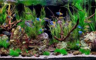 Грот для аквариума своими руками: как сделать каменный, стеклянный или деревянный домик для рыб