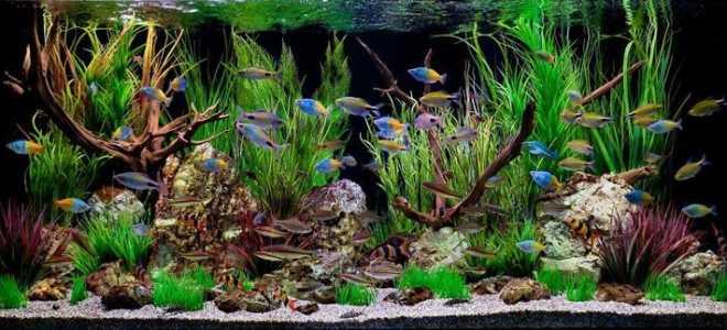 Акваскейп для начинающих своими руками: стили, растения, коряги и рыбки