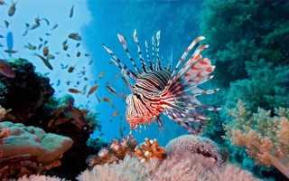 Необычные рыбы: топ-8 морских видов, топ-5 аквариумных обитателей
