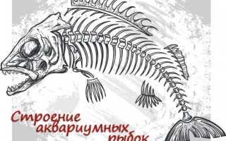 Внешнее и внутреннее строение рыб: скелет, органы и пищеварительная система