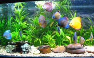 Уход за аквариумными рыбками: правильное содержание и кормление рыб в домашних условиях