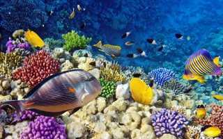 Рыбы Красного моря: какие виды водятся и их название, каталог опасных обитателей