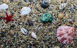 Значение моллюсков в природе и жизни человека: характеристика классов животных, роль в окружающем мире, вред