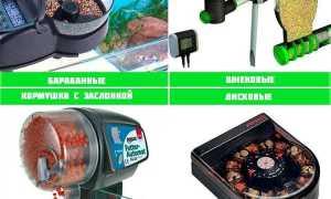 Автокормушка для аквариумных рыб: виды покупных автоматических кормилок и сделанные своими руками