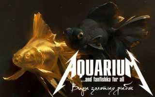 Золотые рыбки: какие бывают и как называются аквариумные виды