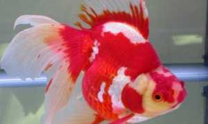 Что делать, если рыба плавает на поверхности воды на боку или брюхом кверху?