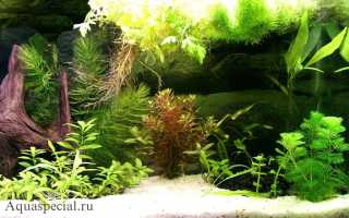 Растения для аквариума: лучший выбор начинающего аквариумиста, какие существуют донные виды водной травы