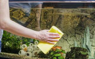 Правила ухода за аквариумом: как следить за чистотой каждый день, правильное проведение еженедельной уборки