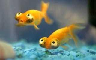 Аптечка аквариумиста. Лекарства для аквариума и рыбок.