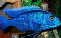Красивые рыбки: характеристика ярких пресноводных обитателей аквариумов
