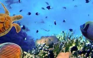 Микрорасбора Галактика: содержание, разведение, выращивание и уход за рыбками