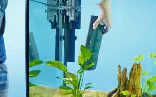 Внутренний фильтр для аквариума: плюсы и минусы прибора, правила хорошего выбора