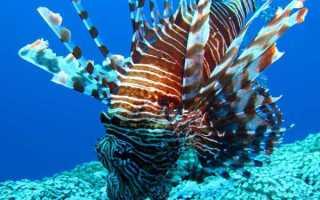 Океанские рыбы: описание и разновидности, акулы и океанические хищники, кто живет и обитает на глубине