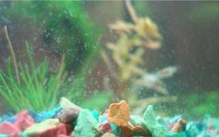 Чистка аквариума с рыбками в домашних условиях: почистить большой и маленький резервуар, средства для мытья